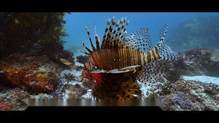 鲨鱼! 水下摄影照明 x OrcaTorch虎鲸D900V 摄影灯