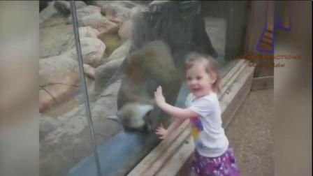 滑稽搞笑的动物园动物合集,有些都会故意吓唬