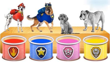 亲子早教动画 狗狗跳进颜料桶里变身汪汪队,学习颜色英语!