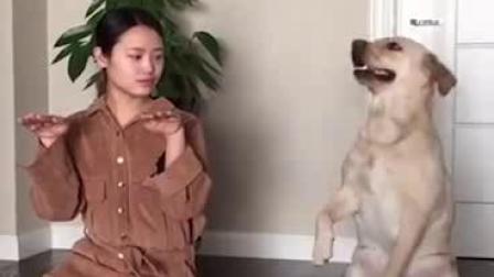 教育狗狗要以身作则,再不行就要以身相许!