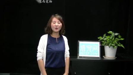 浙江衢州市露西宠物   招聘宠物美容师助理  宠物美容师  接送司机