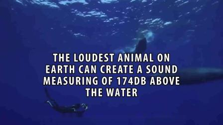 Top Loudest Sounds Ever