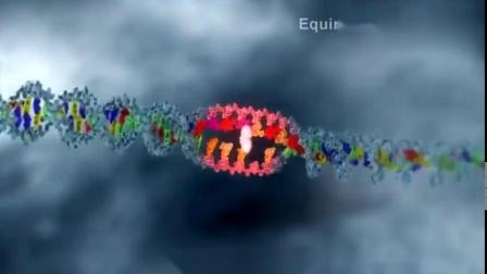 3D演示基因的表达