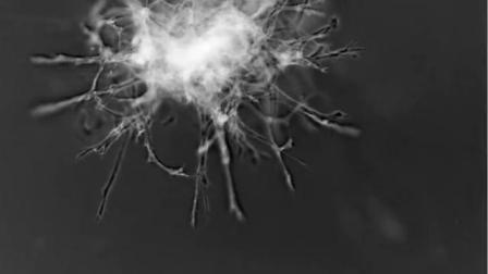 细胞球体形成