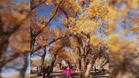 阿拉善盟额济纳旗十月一黄金胡杨林