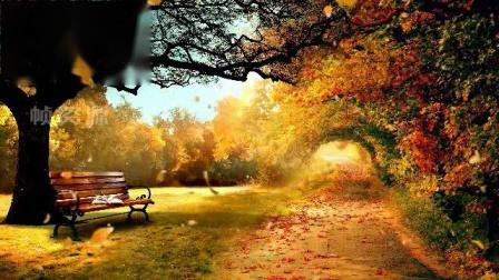 SP0232-秋天风景落叶 唯美枫叶红叶飘落 LED屏幕婚礼视频素材
