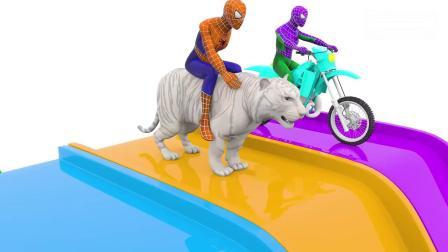 亲子早教动画 3D蜘蛛侠骑大象牛老虎摩托车滑水滑梯!