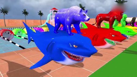 亲子早教动画 熊狮子等动物在室外游泳池骑鲨鱼进行游泳比赛!