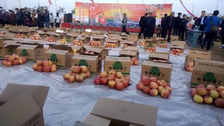 河南省虞城县张集镇红富士苹果第六届张集苹果大奖赛现场