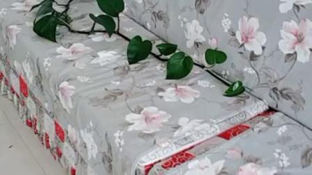 绿萝柱祖宗