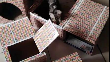 这都是我给猫做的玩具屋。