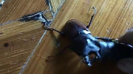 有谁知道是什么虫吗?