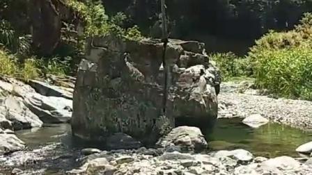 这棵树在这石头上坚强的活着,不怕风吹浪打