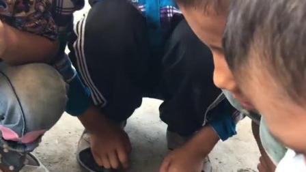 新疆风情-童年乐趣围观仓鼠废寝忘食