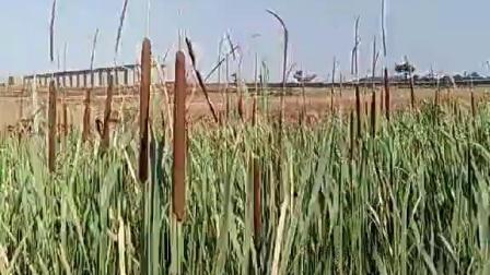 这水草国内有吗?这穗有用吗?