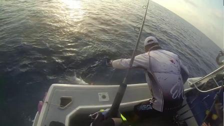 澳大利亚客人激烈操驾神夺鱼竿实况