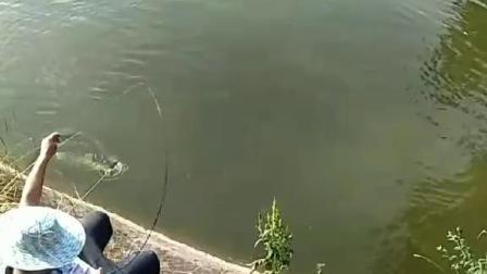 断了竿鱼没有跑