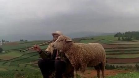 老人与羊!你们看到了什么?欢迎热评