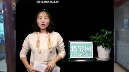 猎宠网 猎宠播报-福建石狮市名门汪族宠物医院