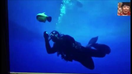 【BIKI在日本】水下机器人BIKI惊现日本收视率最高的周日黄金时段播出的综艺旅行节目——《世界の果てまでイッテQ》,引众观众爆笑不止!