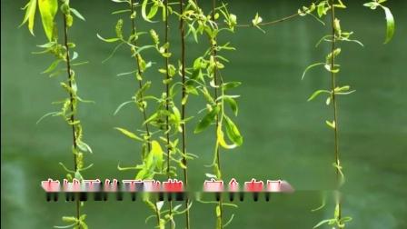 """《寒食》韩翃 视频朗诵""""日暮汉宫传蜡烛 轻烟散入五侯家"""""""