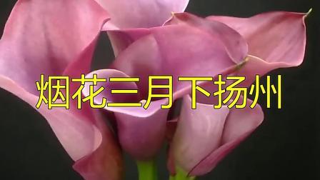 一首《烟花三月下扬州》曾经火遍大江南北,经典歌曲!