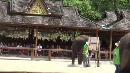 云南西双版纳野象谷里的大象表演