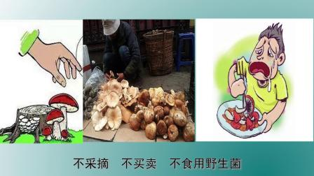 预防食用野生菌中毒宣传