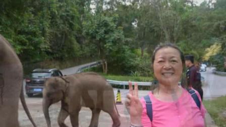 2018重返云南红土地(之十一):西双版纳野象谷景区