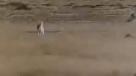 我在可爱的动物截了一段小视频