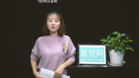 猎宠网 猎宠播报-上海黄浦区麦兜宠物店