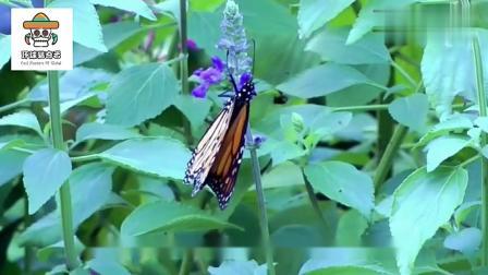 环球猎奇者:毛毛虫破茧成蝶,让小女孩的心都