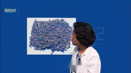 爱剪辑-卫生职称考试 中药专业知识 中药鉴定 第二讲 第5单元 叶类中药