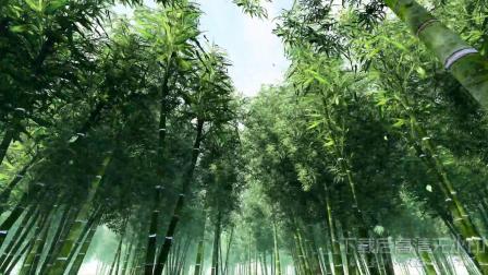 s365 超唯美意境竹林深处竹子大自然美景生态环保视频素材ae模板  会声会影 视频背景 led舞台背景 LED视频素材 开场视频