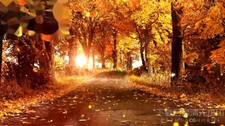 s377 金秋金色秋天落叶回忆舞台LED背景视频ae模板  会声会影 视频背景 led舞台背景 LED视频素材 开场视频