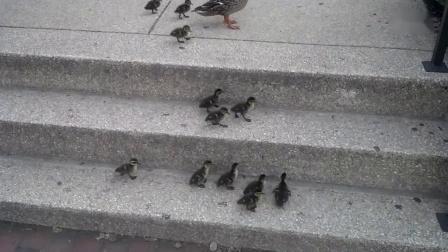 勇往向上。(好好看,好勵志)_超清