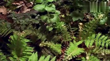 音乐风景短片:《Newlife(Pt2)新生活第二部》,神