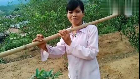 广西小玲家种的东西真是大个呢,知道这个叫什