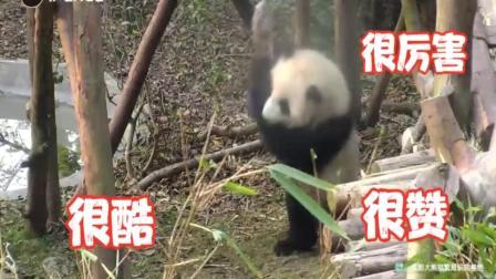 熊猫还想获得2018年网络十大热门词汇