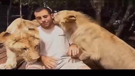 奇闻:一头狮子向男子冲了过来,扑在男子身上