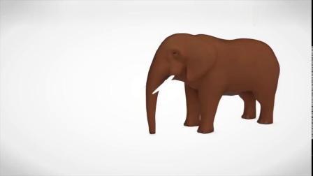 亲子益智早教大象吃彩色饼干变色