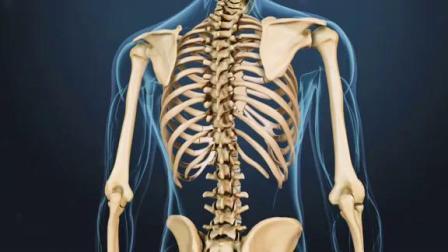 你知道脊柱椎体是怎样形成的吗?