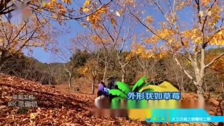 """童趣大冒险20181216精彩预告:探秘""""会走路的毒草莓"""""""