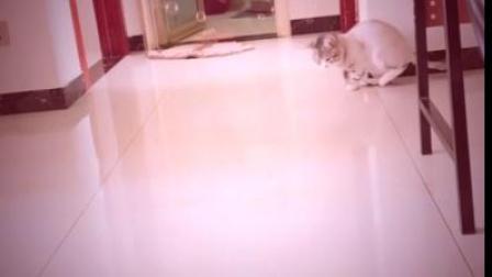 天上吹泡泡,小猫咪的反应太搞笑了,连走路都