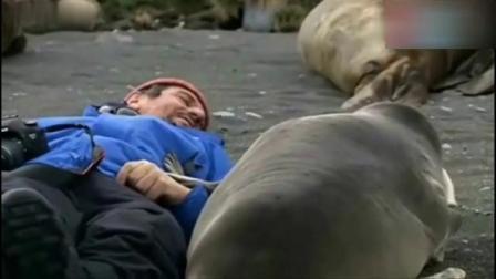 海豹爬上岸,向摄影师撒娇求抱抱,镜头记录下
