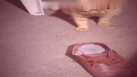 【猫戏老鼠】老鼠的身法何等的敏捷,但就是逃