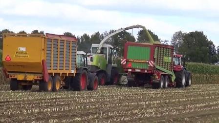 克拉斯美洲虎850收割机收获玉米青贮,装载凯斯和芬特