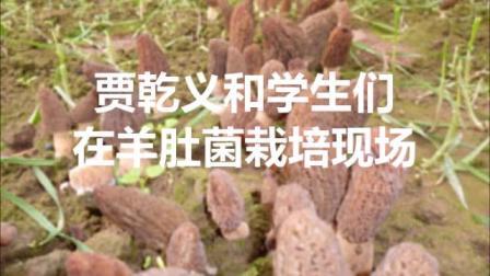 贾乾义和学生们在羊肚菌栽培现场