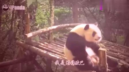 搞笑视频:当熊猫遇上印度神曲,我真的快笑岔