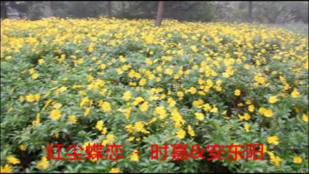 【红尘蝶恋】安东阳  世嘉